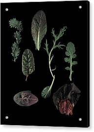 Herbs Leaves On Black Acrylic Print by Davies And Starr