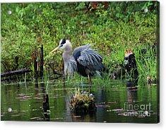 Heron In Beaver Pond Acrylic Print