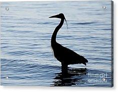 Heron In Silhouette Acrylic Print