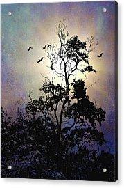Herons At Dusk Acrylic Print