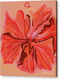 Hibiscus Color Lines Acrylic Print