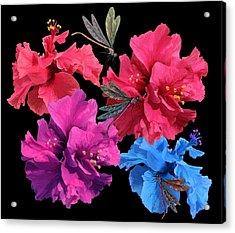 Hibiscus Dragonfly Acrylic Print