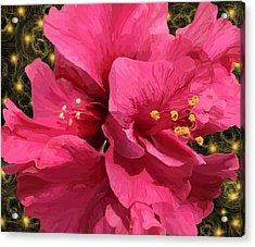 Hibiscus Pollen Acrylic Print