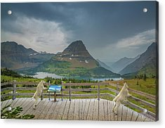 Hidden Lake Overlook // Glacier National Park Acrylic Print