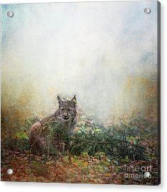Acrylic Print featuring the mixed media Hide And Seek by Eva Lechner
