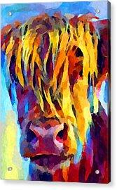 Highland Cow 5 Acrylic Print