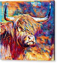 Highland Cow 6 Acrylic Print