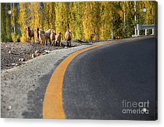Highway Story Acrylic Print