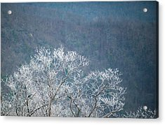 Hoarfrost Collects On Branches Acrylic Print