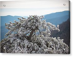 Hoarfrost In The Blue Ridge Mountains Acrylic Print