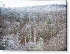 Hoarfrost In The Tree Tops Acrylic Print