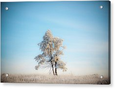 Acrylic Print featuring the photograph Hoarfrost On The Prairie by Mark Duehmig