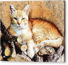 Acrylic Print featuring the photograph Hogarty The Ginger Cat by Dorothy Berry-Lound