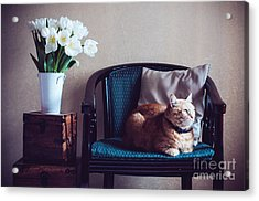 Home Interior, Cat Sitting In An Acrylic Print