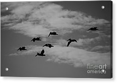 Homeward Acrylic Print