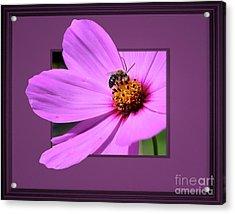 Honey Bee On Pink Acrylic Print