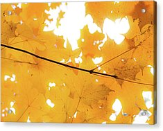 Honey Colored Happiness Acrylic Print