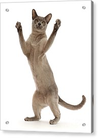 Acrylic Print featuring the photograph Hooray For The Weekend by Warren Photographic