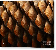 Horizontal Full Frame Macro Of A Cone Acrylic Print