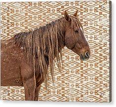 Horse Blanket Acrylic Print
