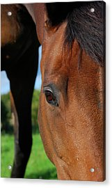 Horse Grazing On Grass In Green Field Acrylic Print