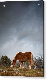 Horse Grazing On Route Acrylic Print