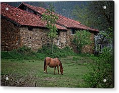 Horse In The Field Next To A Rural House Acrylic Print
