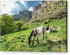 Horse On Balkan Mountain Acrylic Print