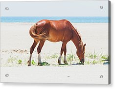 Horse On Beach Acrylic Print