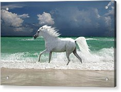 Horse Running Through Surf Acrylic Print