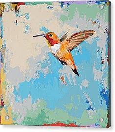 Hummingbird #24 Acrylic Print