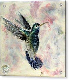 Hummingbird Flight Acrylic Print