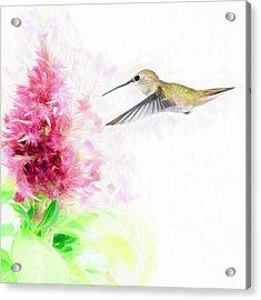 Hummingbird Pastels Acrylic Print