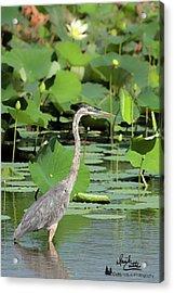 Hunting Among The Lotus Acrylic Print