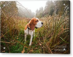 Hunting Dog In The Foggy Morning In Acrylic Print