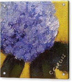 Hydrangea I Acrylic Print