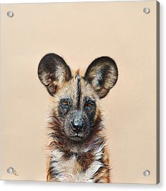 I Am A Wild Thing - African Painted Dog Acrylic Print