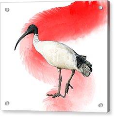 I Is For Ibis Acrylic Print