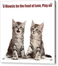 Acrylic Print featuring the photograph If Mewsic Be The Food Of Love, Play On by Warren Photographic
