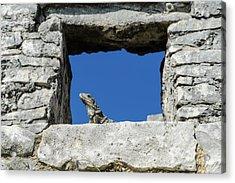 Iguana At Tulum Ruins Acrylic Print