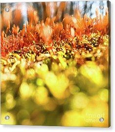 Acrylic Print featuring the photograph Orange Moss 3 by Atousa Raissyan