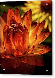 Illuminate Acrylic Print