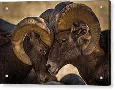 I'm Gonna Lean Up Against You, You Just Lean Right Back Against Me. Acrylic Print
