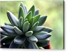 In Focus View Of Green Houseplant With Acrylic Print