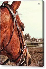 In French Chevel Acrylic Print