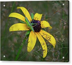Acrylic Print featuring the photograph In The Meadow by Dale Kincaid