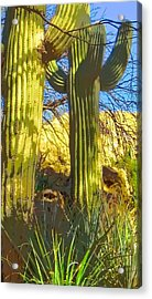 In The Shadow Of Saguaros Acrylic Print