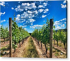 In The Vineyard Acrylic Print
