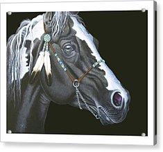 Indian Paint Horse Acrylic Print