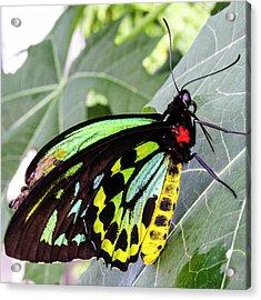 Insect Kaleidescope Acrylic Print